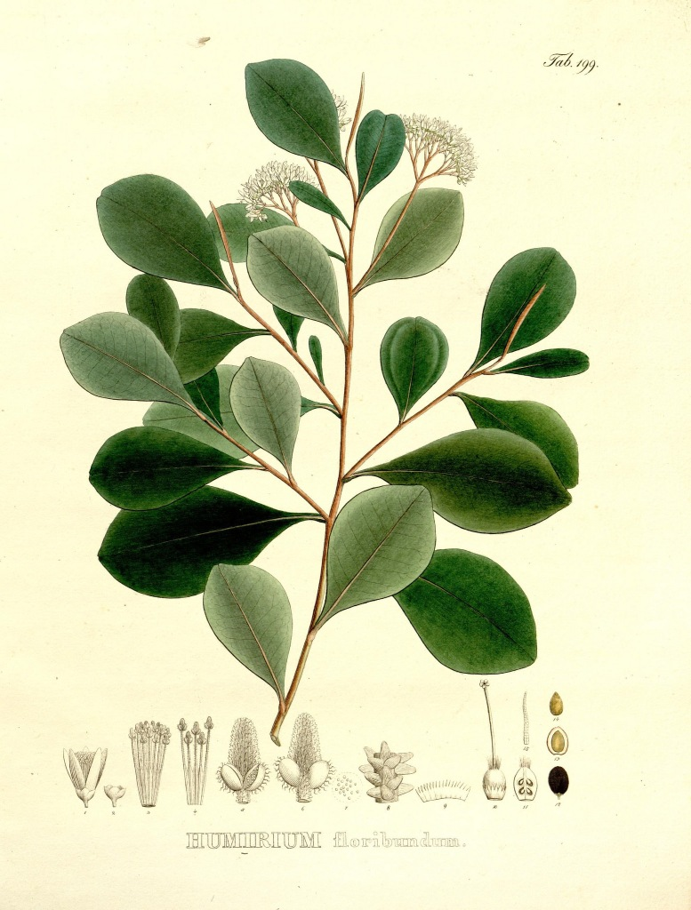 Nova genera et species plantarum